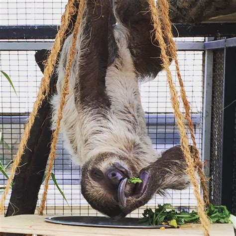 The Sloths at Budapest Zoo, Hungary   Get Jaunty