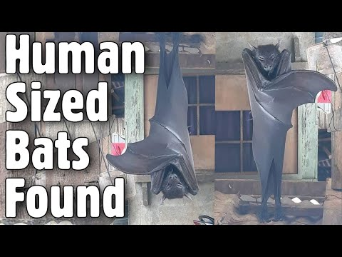 """Dlisted   Open Post: Hosted By """"The Human-Sized Bat"""""""
