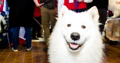 Why You Need to Meet the Breeds® at the AKC National